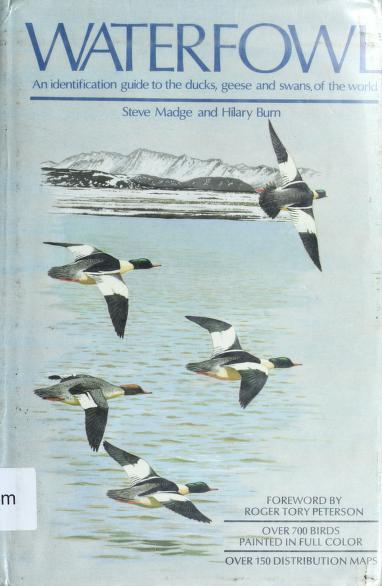 Waterfowl by Steve Madge
